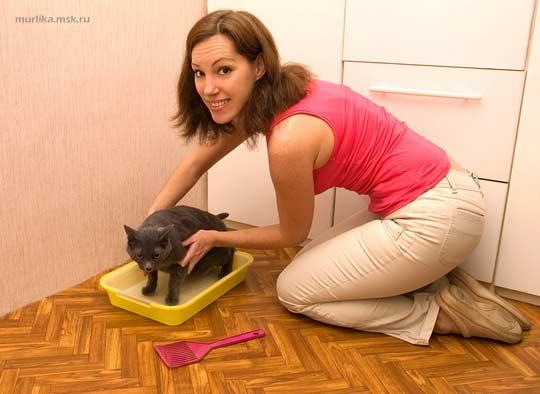 Как приучить кота к горшку фото