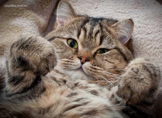 Что вы должны знать о тонкой кошачьей натуре фото