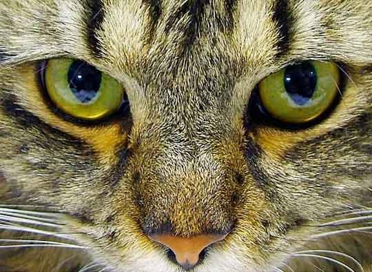 Как видят кошки фото