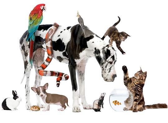 С кем уживаются кошки фото