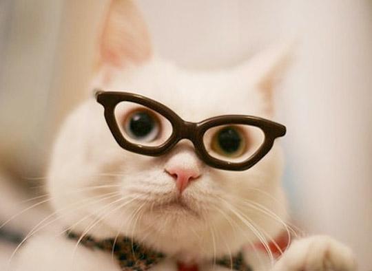 Какие бывают кошки фото