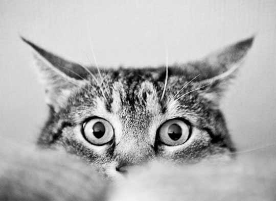 Чего боятся кошки фото