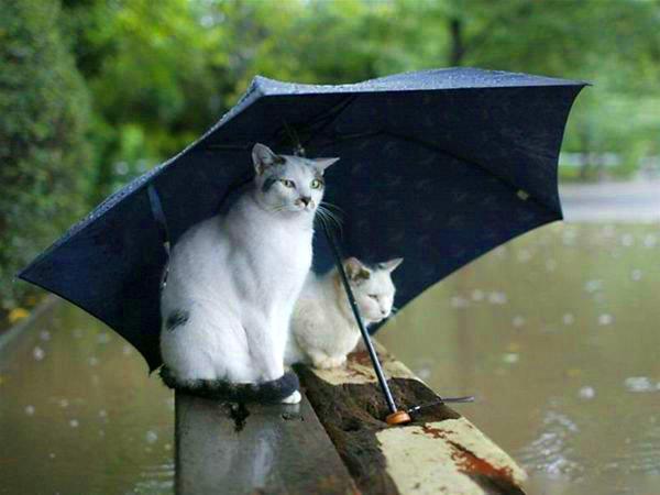 Как кошки предсказывают погоду фото