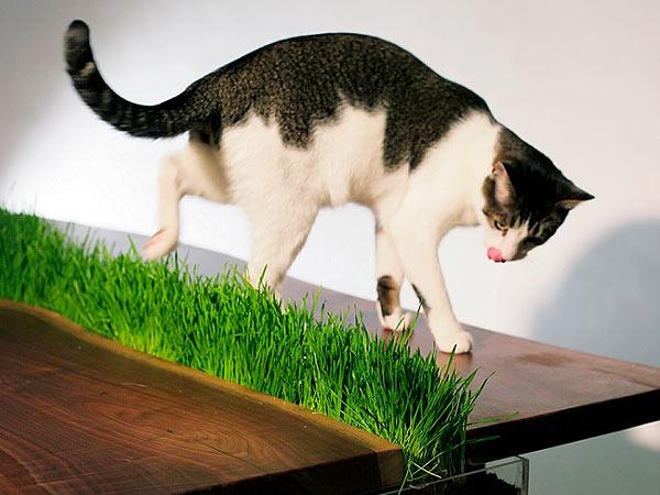 Как отучить кошку лазить по столам фото