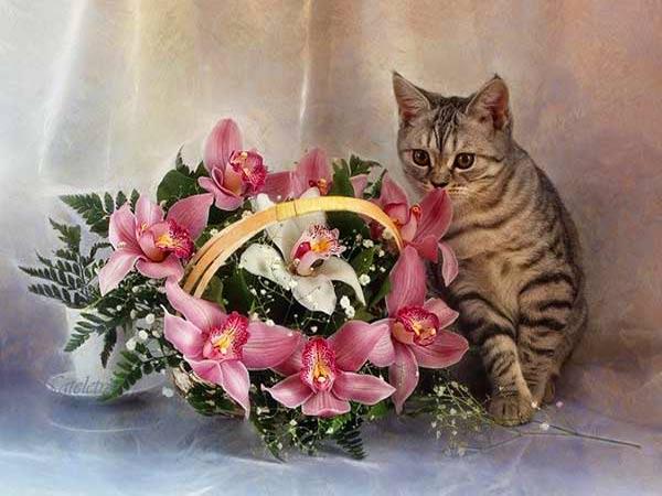 Смерть кошке может принести…лилия фото