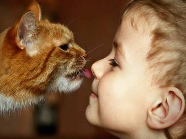 Как подружить ребенка с кошкой фото