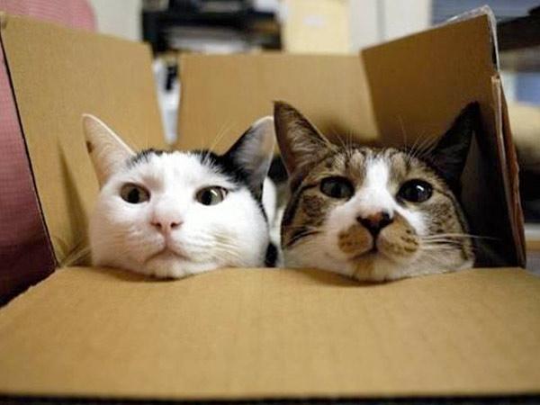 Почему кошки любят картонные коробки фото