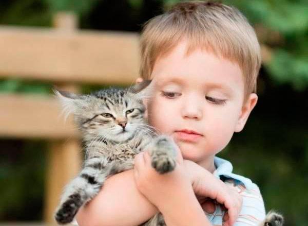 Кошки — лекари фото