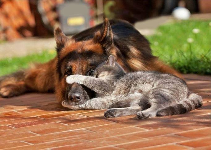 Почему кошки лучше собак. Десять доводов фото