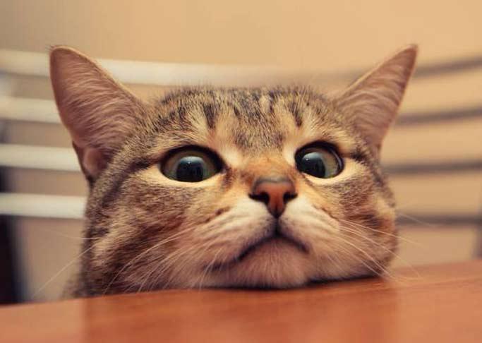Если кошка лезет на стол фото