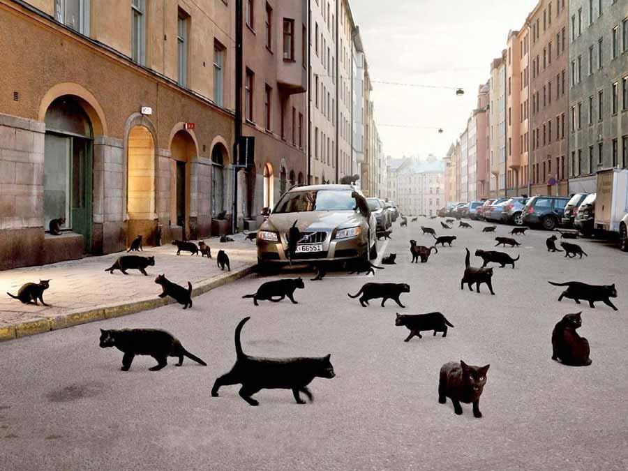 Поверья и приметы, связанные с кошками фото