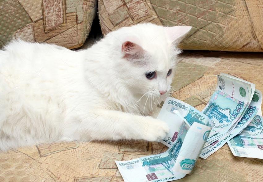 Сколько стоит содержание кошки в месяц фото