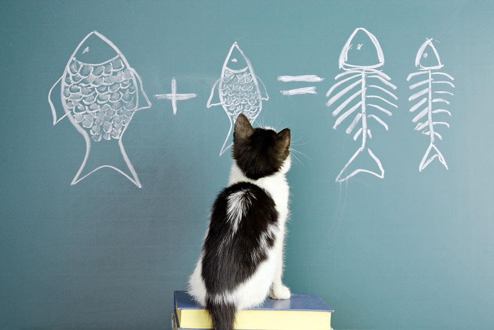 Умственные способности кошки фото