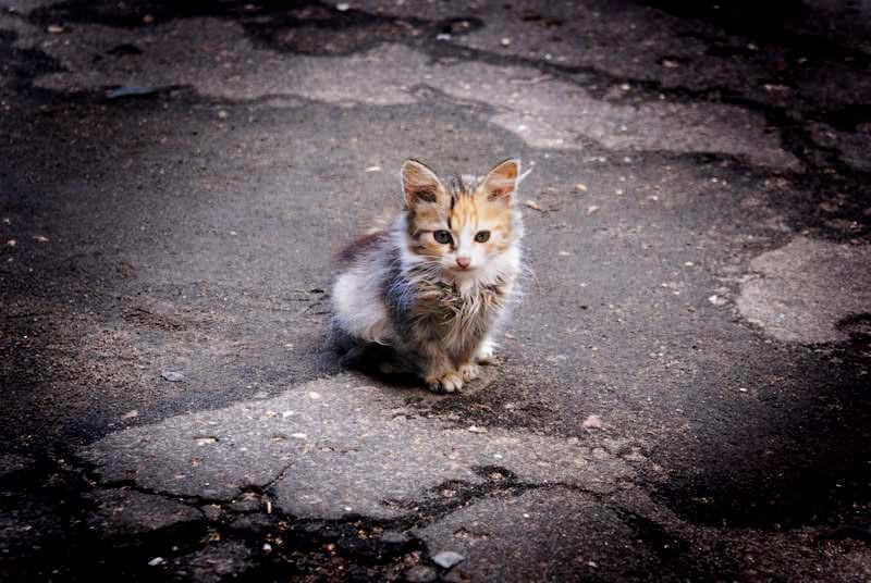 Что делать, если вы подобрали бездомную кошку?