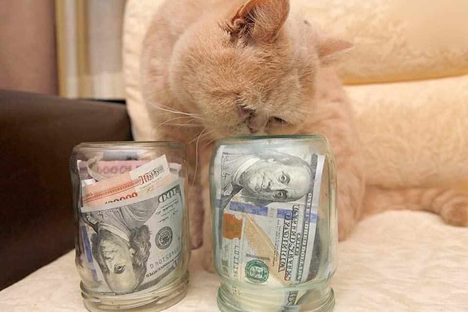 Как сэкономить на содержании кошки фото