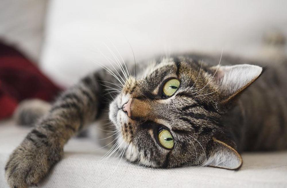 Интересные биологические особенности кошек фото