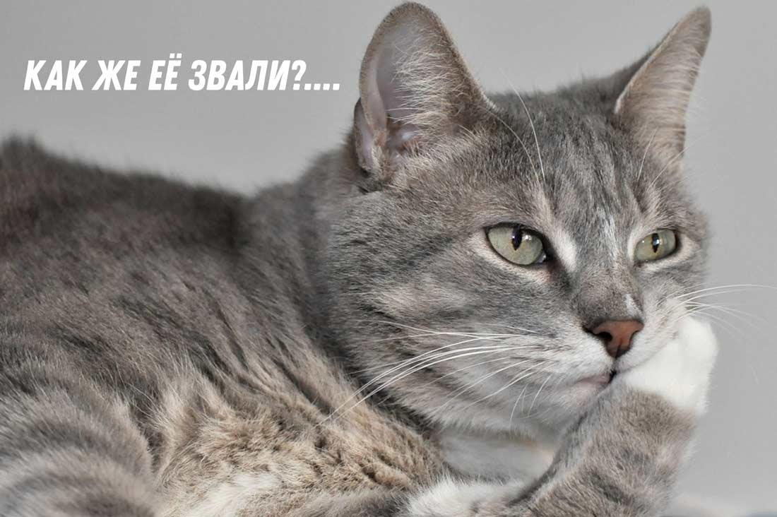 Память у кошек фото