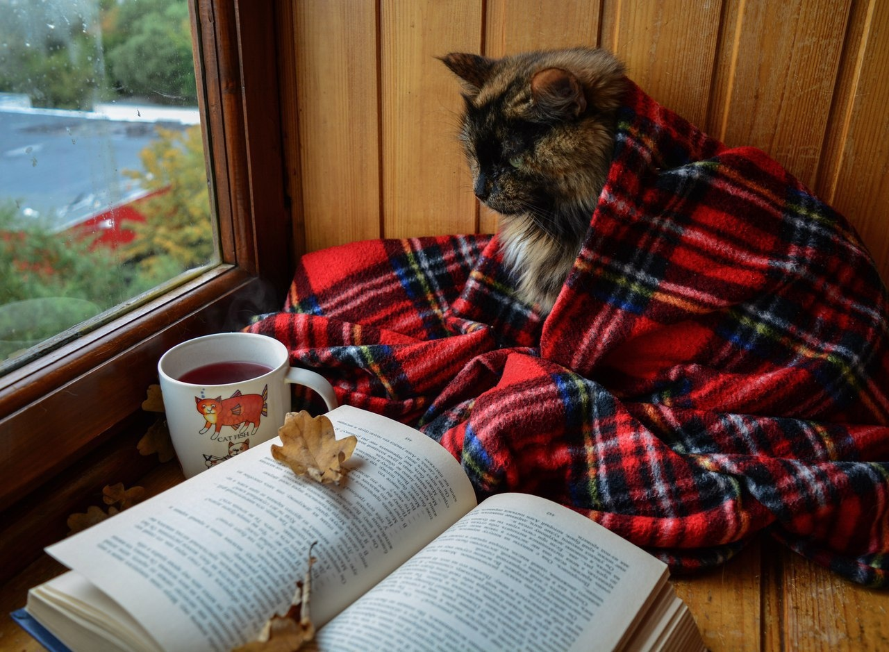 Книги про кошек и котов фото