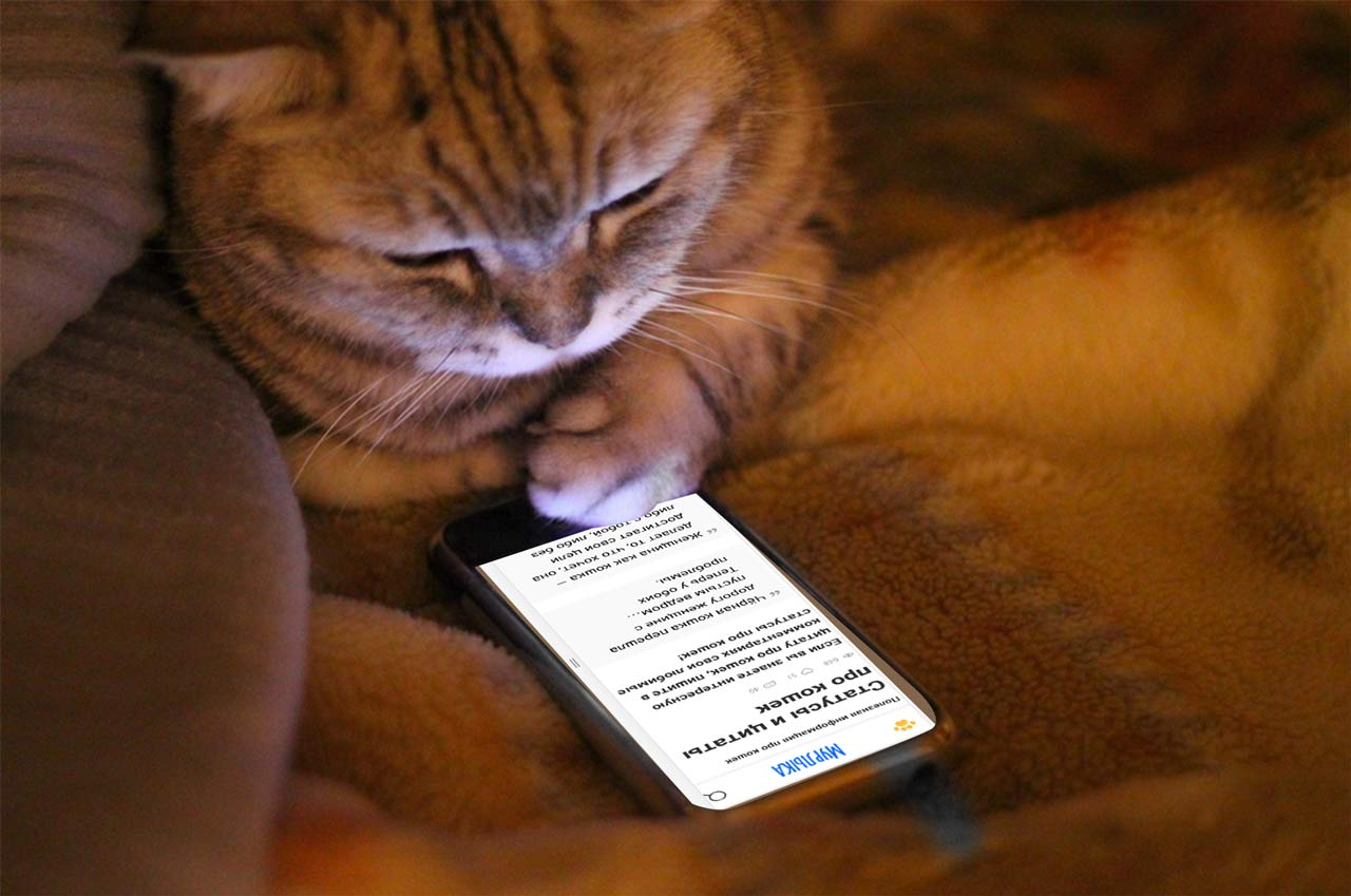 Статусы и цитаты про кошек фото