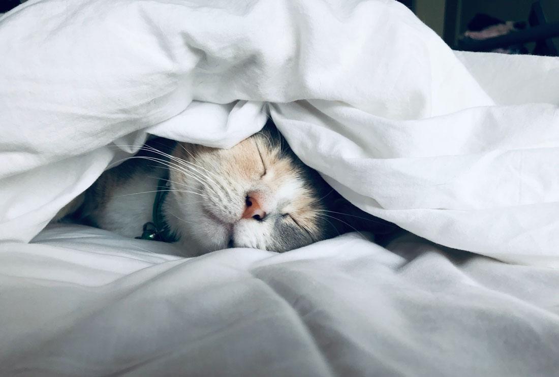 Почему кошка спит с хозяином? фото