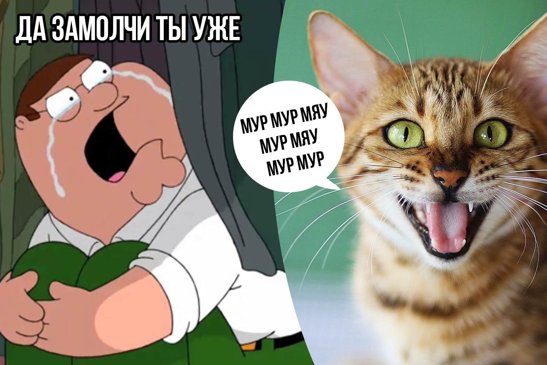 Почему некоторые кошки ну очень «разговорчивы» со своими хозяевами фото