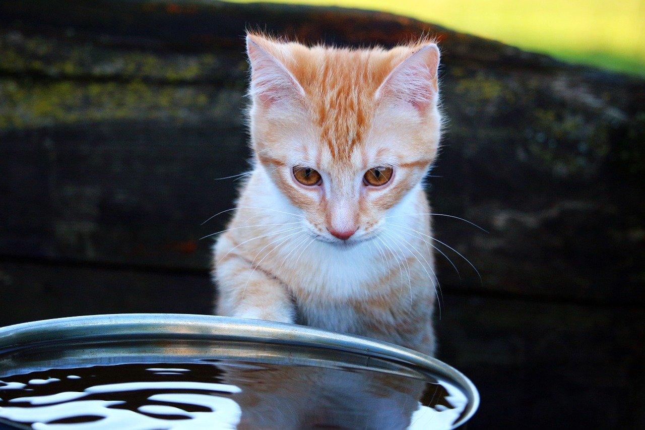 Почему большинство кошек ненавидит воду фото