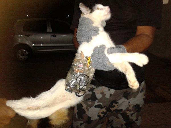 В бразильской тюрьме поймали кота-контрабандиста фото