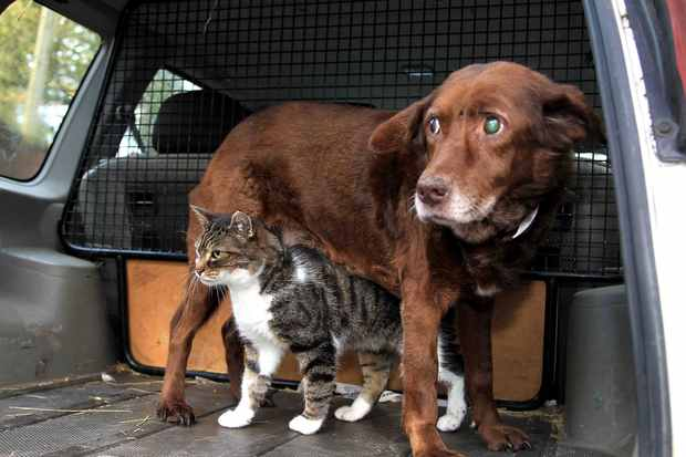 Кот стал поводырем для слепой собаки фото