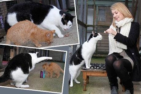 Самый большой кот Британии наконец смог найти себе дом фото