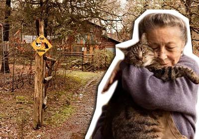 72-летняя американка Сиглинда Скарпа живет в лесном доме с 300 кошками фото