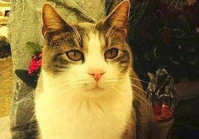 Кот по кличке Тольдо навещает могилу своего хозяина фото