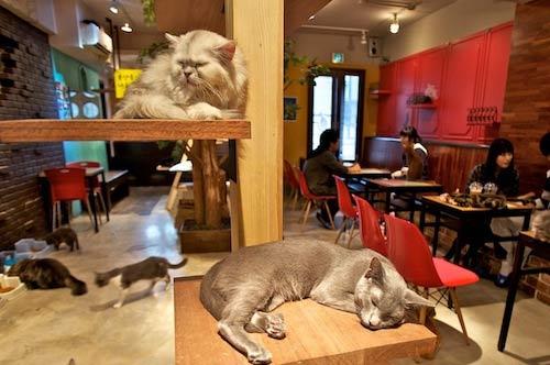 В Лондоне открывается кошачье кафе фото