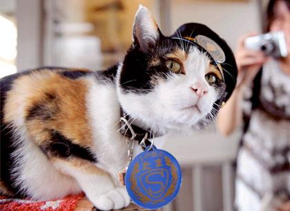 Трехцветная кошка по имени Тама — начальник железнодорожной станции Киси фото