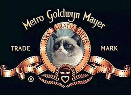 Grumpy Cat станет героем игрового фильма фото