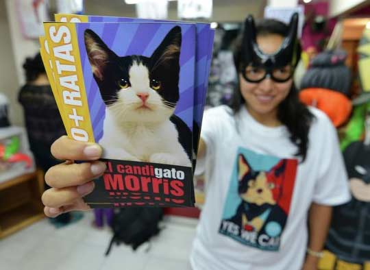 Мэром мексиканского города может стать кот фото