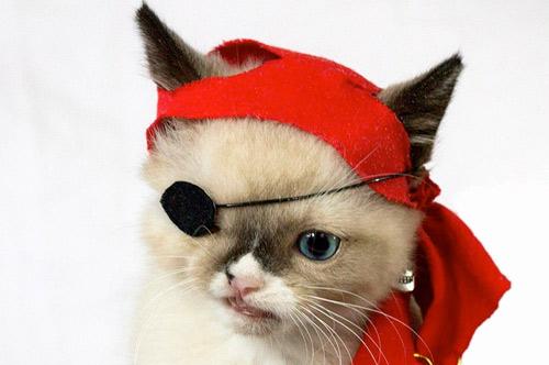 Одноглазый котенок-пират Сэр Стаффингтон фото