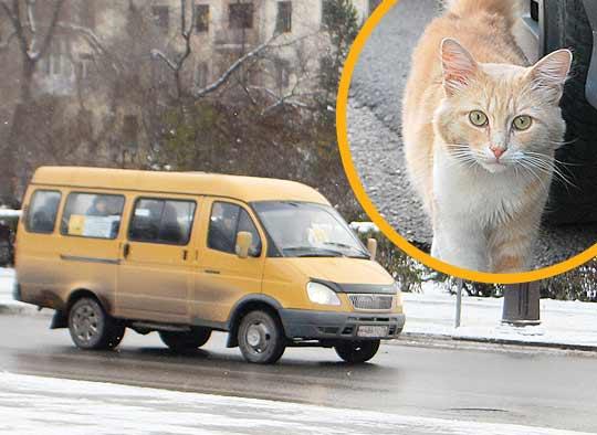 Бродячий кот прокатился в маршрутке по билету фото