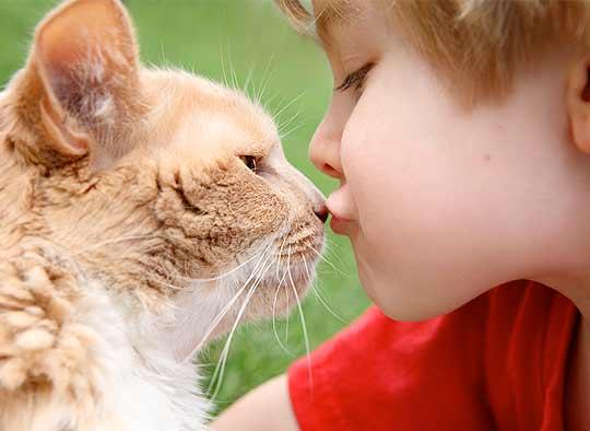 Целебная сила мурлыки: американские ученые считают, что кошка должна быть в каждом доме фото