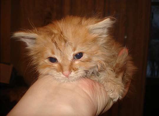 В Твери котенок просидел неделю в вентиляционной шахте фото