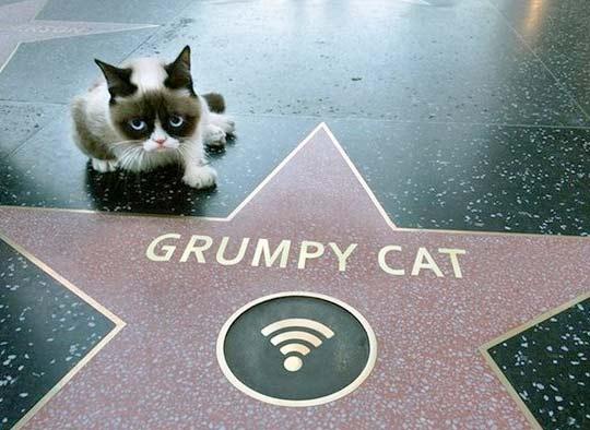 Сердитый кот (Grumpy Cat) получил свою звезду на Аллее славы фото