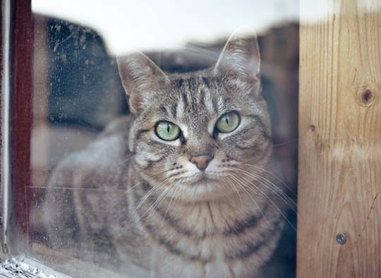 В Башкирии кошка спасла деревню от пожара фото