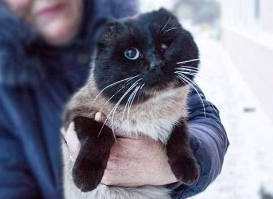 В Благовещенске кот и его хозяйка нашли друг друга спустя два года фото