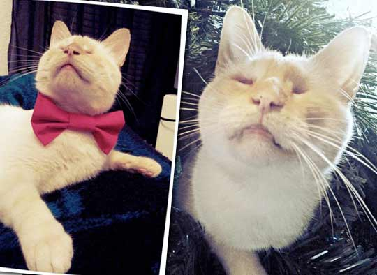Бездомный слепой кот Люциус чудом остался жив фото