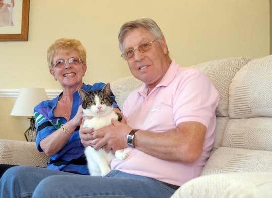 Кот просидел пять дней внутри дивана, который продали фото