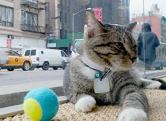 В Нью-Йорке открыли кафе для кошек фото