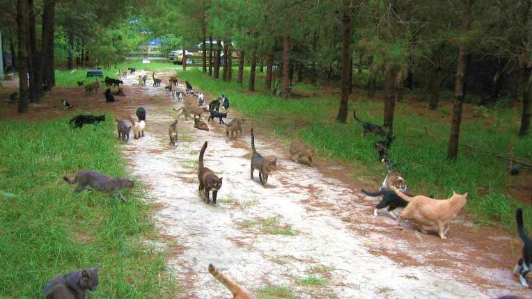 В США  бродячие кошки наводнили остров Тонаванда фото