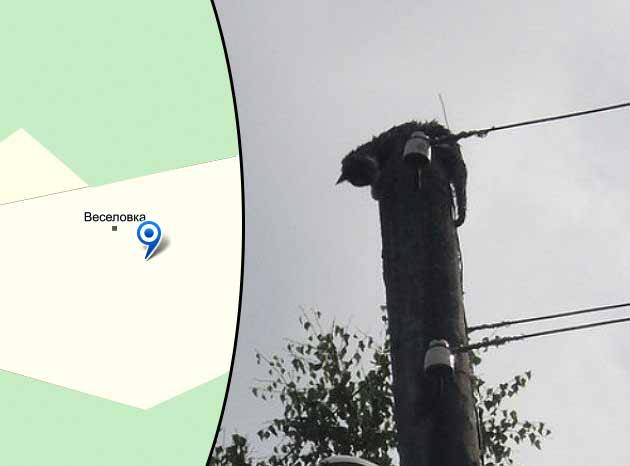 Поселок в Коми обесточили ради спасения кошки фото