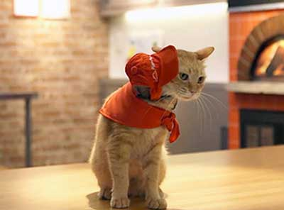 В японской пиццерии посетителей обслуживают коты фото