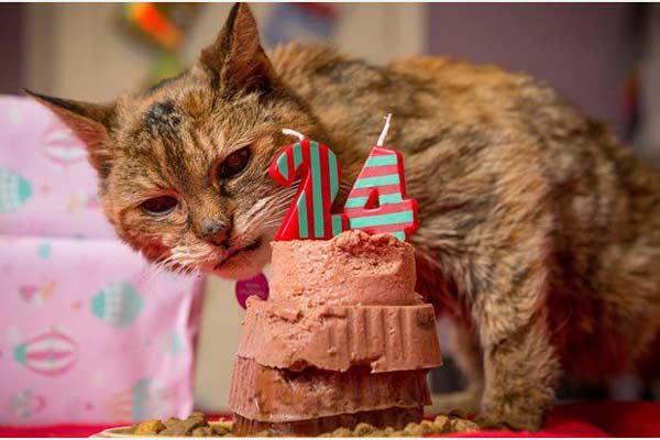 В Британии умерла самая старая в мире кошка фото