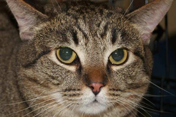 Кошка-путешественница из Дании загадочным образом оказалась в Англии фото